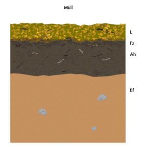 mull_diagram